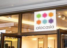 image stickers pour l'artisan fleuriste Alocasia à Toulouse